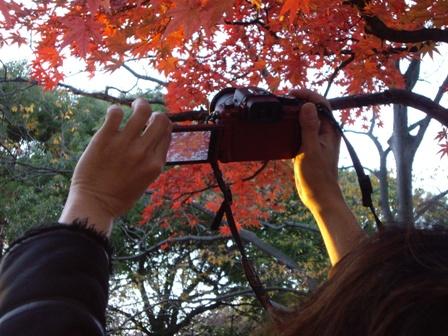 高いところにある紅葉を撮影してみた。下が撮影した内容。