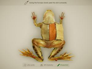 froggipedia画面